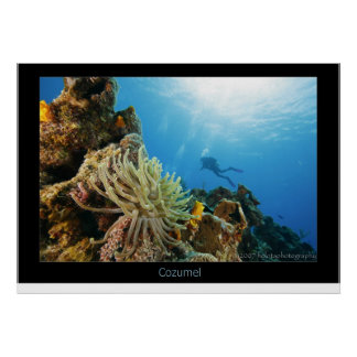 Cozumel Reef Poster