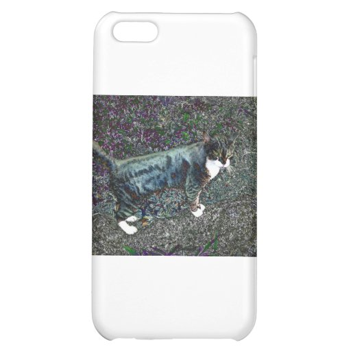 Crackers the Cat Case For iPhone 5C