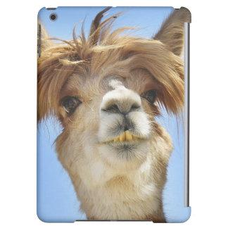 Crazy Hair Alpaca