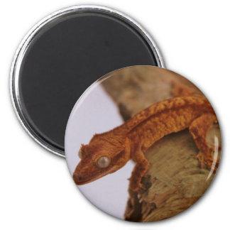 Crested Gecko on a Log Magnet