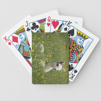 Cria In Buttercups Bicycle Playing Cards