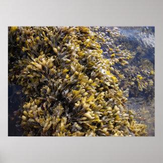 crisp seaweed poster