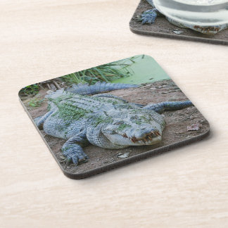 Crocodile / Alligator Photo Coaster