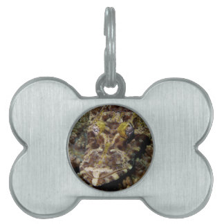 Crocodilefish Cymbacephalus Beauforti Pet Tag