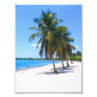Cuban Palm Trees Art Photo