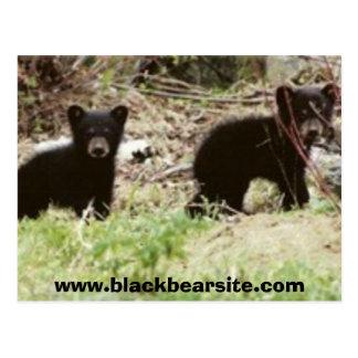 cubs www blackbearsite com postcard