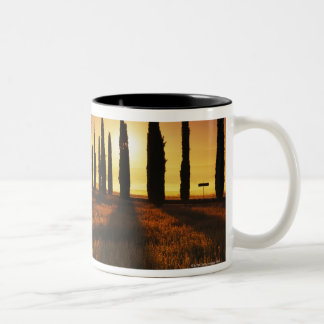 (cupressus sempervirens) - Europe, Italy, Two-Tone Coffee Mug
