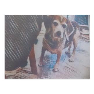 Curious Beagle Postcard