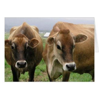 Curious cows card
