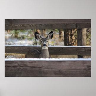 curious deer poster