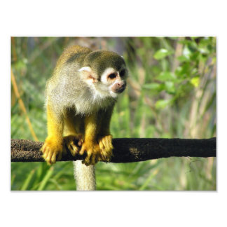 Curious Monkey by Don Maples Photo Print