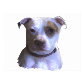 Cusomize Your Own Pit Bull Love Postcard