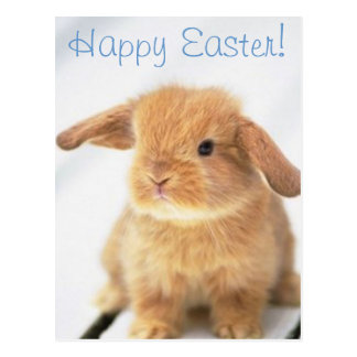 Cute Baby Bunny Happy Easter Design Postcard