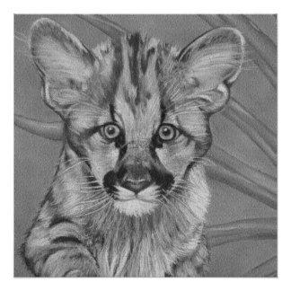 cute baby cougar big cat wildlife realist art perfect poster