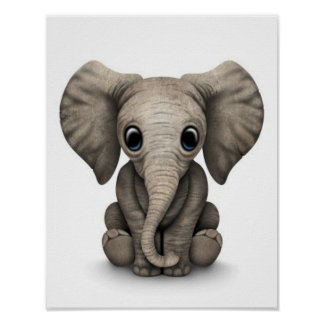 Cute Baby Elephant Calf Sitting Down White Poster