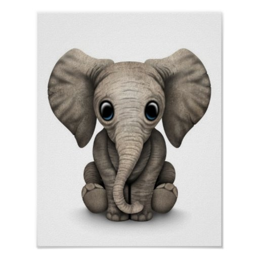 Cute Baby Elephant Calf Sitting Down, White Poster