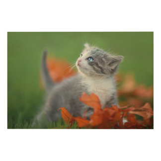 Cute Baby Kittens Playing Outdoors in the Grass Wood Print