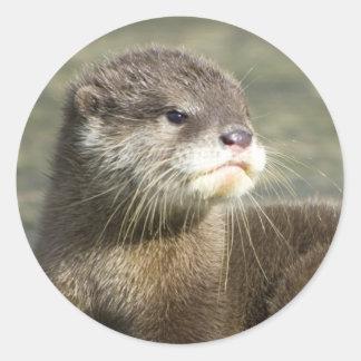 Cute Baby Otter Classic Round Sticker