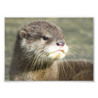 Cute Baby Otter Photo Print