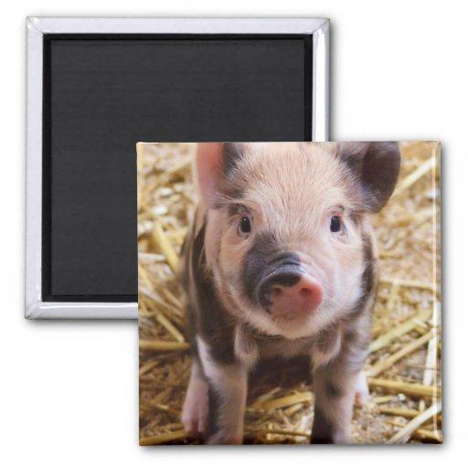 Cute Baby Piglet Farm Animals Barnyard Babies Refrigerator Magnets