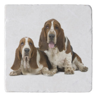 Cute Basset hounds Trivet