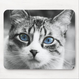 Cute beautiful cat with blue eyes portrait mouse pad