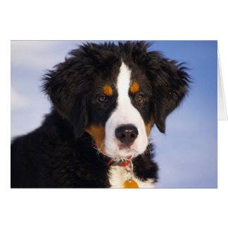 Cute Bernese Mountain Dog Puppy Picture Stationery Note Card