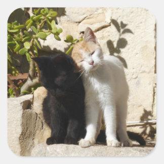 Cute black and white orange kittens square sticker