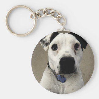 Cute black and White Pit Bull Terrier Key Ring