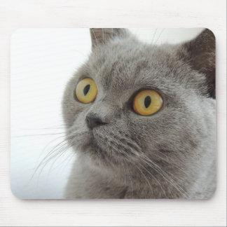Cute British Shorthair cat Mouse Pads