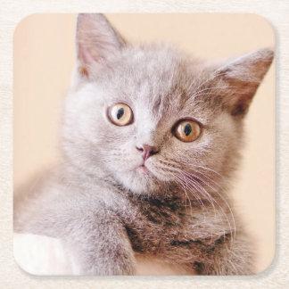 Cute British Shorthair Cat Square Paper Coaster