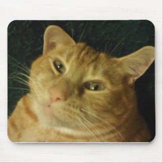 Cute Cat just lazying around..... Mouse Pad