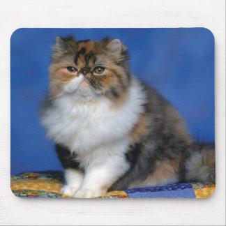 Cute Cat Kitten M003 Mousepads