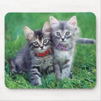 Cute Cat Kitten M005 Mouse Pad