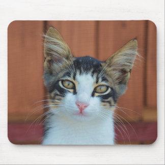 Cute cat portrait mousepad