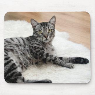 Cute cat posing mousepads