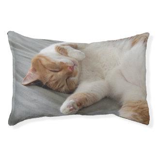 Cute cat sleeping Dog Bed