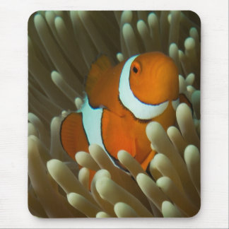 Cute Clownfish Great Barrier Reef Coral Sea Mouse Pad