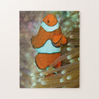 Cute Clownfish Great Barrier Reef Coral Sea Puzzles
