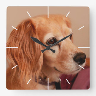 cute cocker spaniel  golden side view wall clock