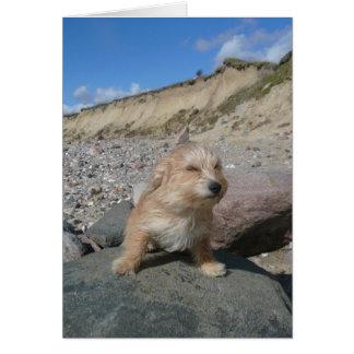 Cute dog at the beach greeting card
