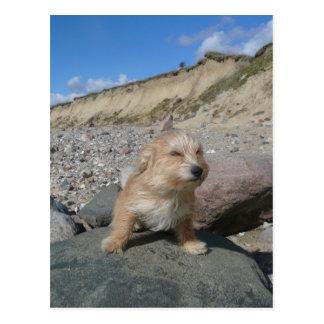Cute dog at the beach postcard