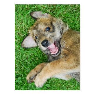Cute dog Berger Picard puppy. Postcard