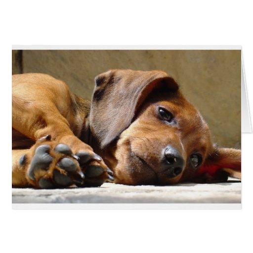 Cute dog greeting cards
