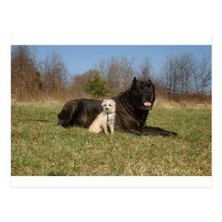 Cute Dog Couple Postcard