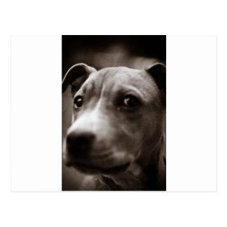 Cute dog face CUSTOMIZABLE Post Card