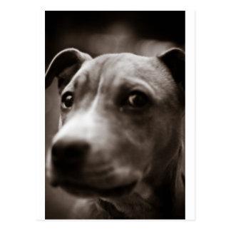 Cute dog face CUSTOMIZABLE Post Cards
