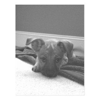 Cute Dog Post Card