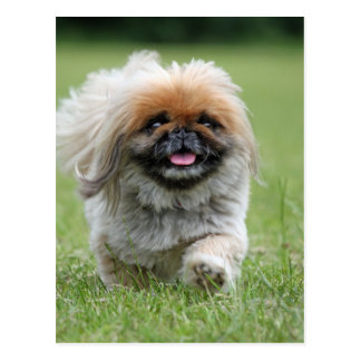 Cute dog postcards