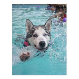 Cute dog swimming in pool postcard